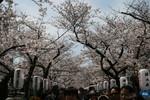 Highlight for Album: Kamakura
